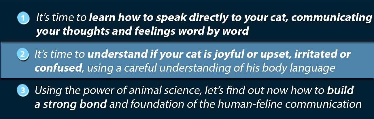 How To Finally Speak Cat
